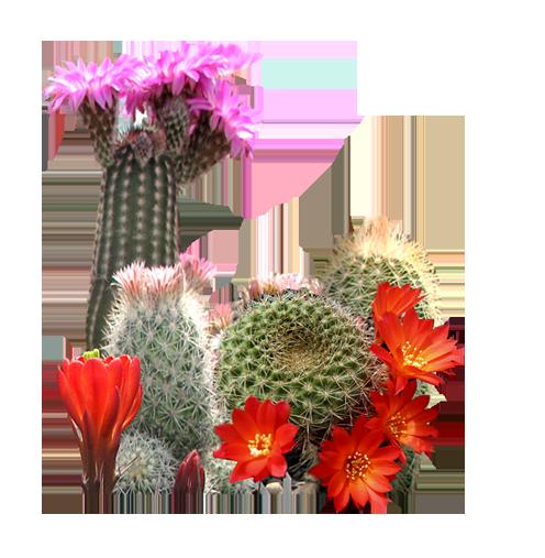Kaktusy do Twojego ogrodu